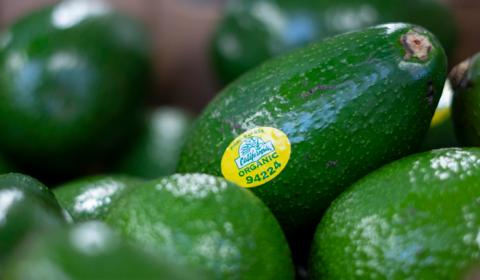 Del Rey Avocado Featured Image